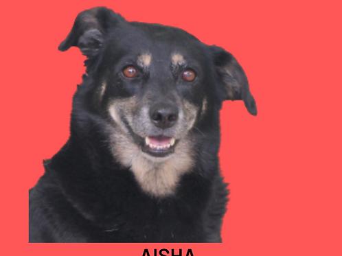 Aisha-300 Anjos