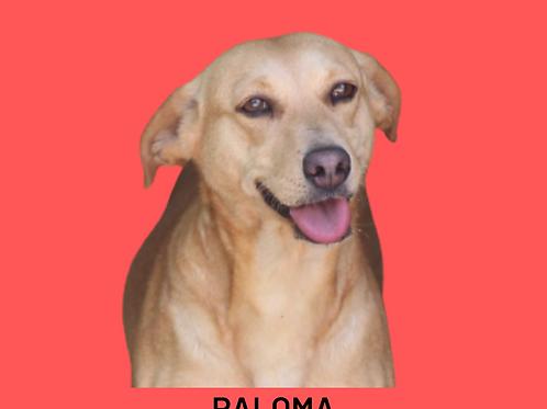Paloma-embu