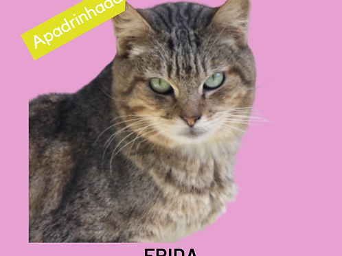 Frida-gata