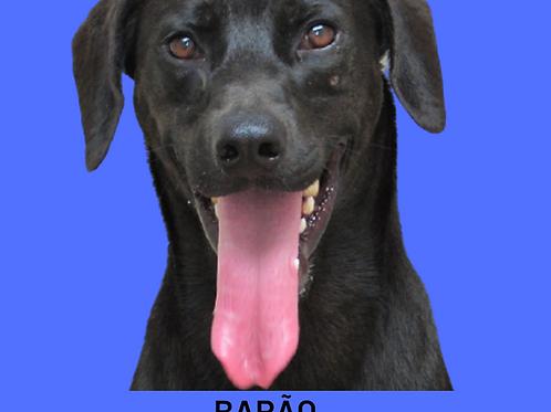 Barão-layla