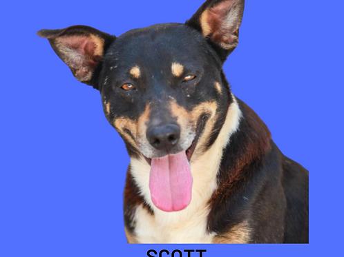 Scott-parelheiros