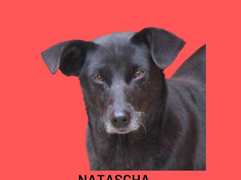 Natascha-300 Anjos