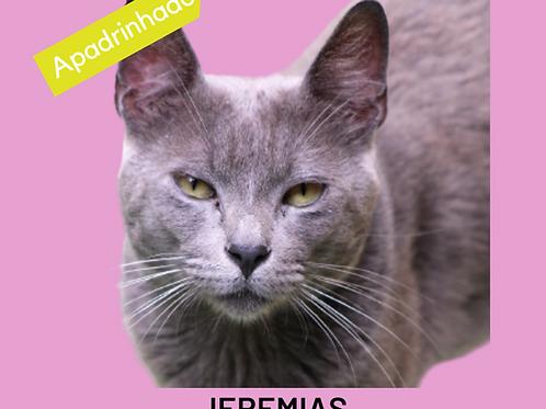 Jeremias-gato