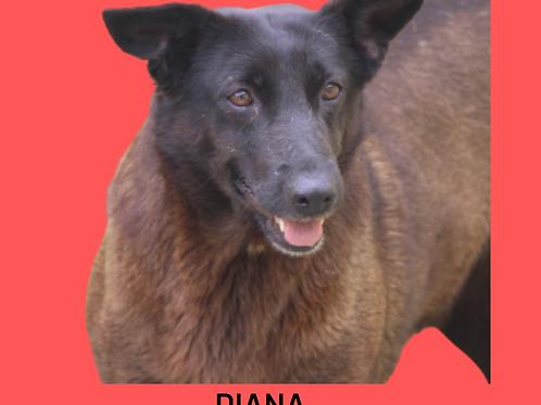 Diana-embu