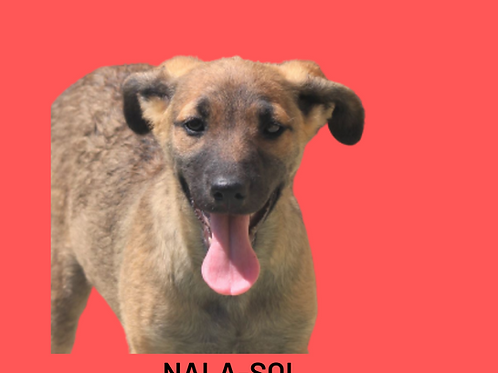 Nala-Sol