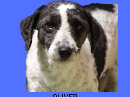 Oliver-ipojuca