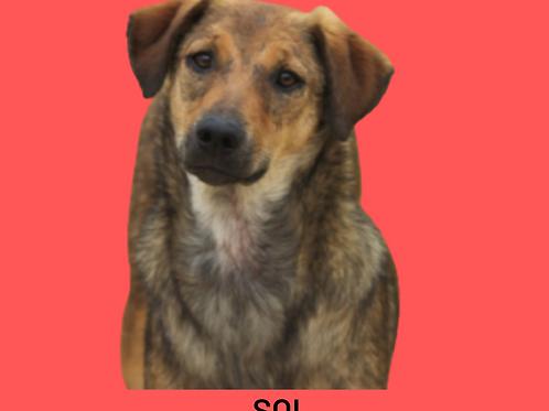 Sol-tutty