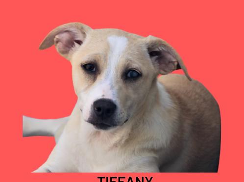 Tiffany-sandra