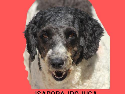 Isadora-ipojuca