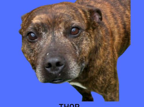 Thor-bruno