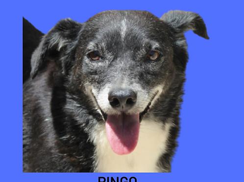Pingo-Sr. Claudio