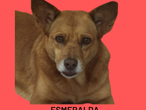 Esmeralda-cesar