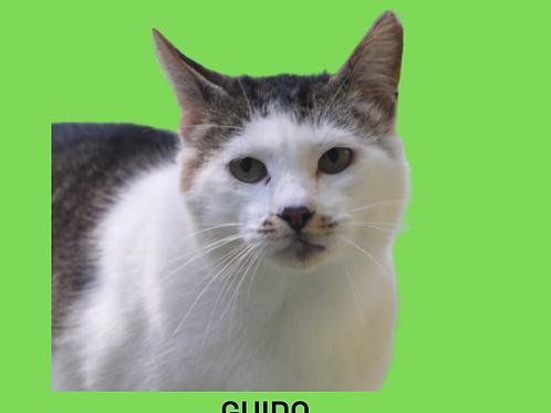 Guido-gato