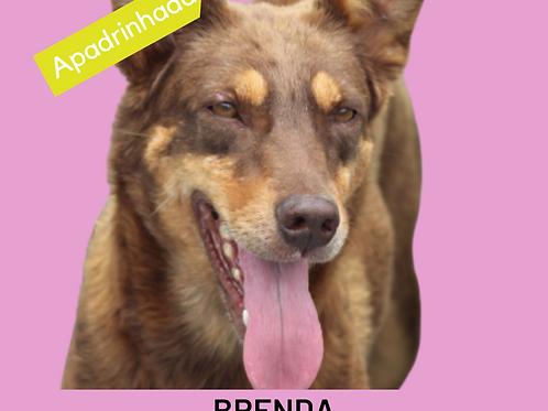 Brenda-300 Anjos