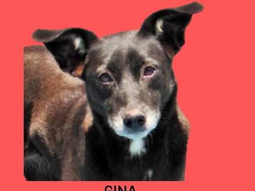Gina-claudio