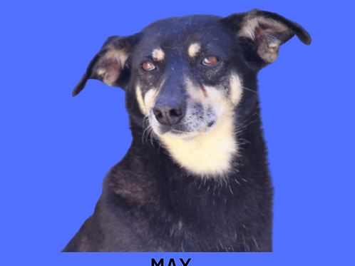 Max-nina