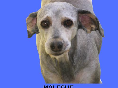 Moleque-brasilândia