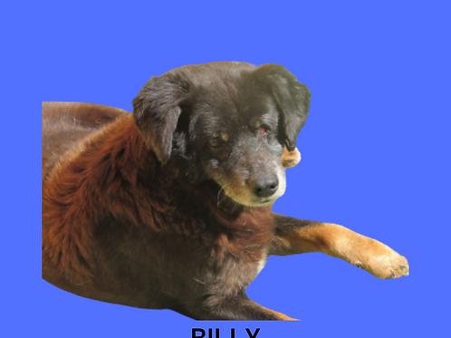 Billy-parelheiros