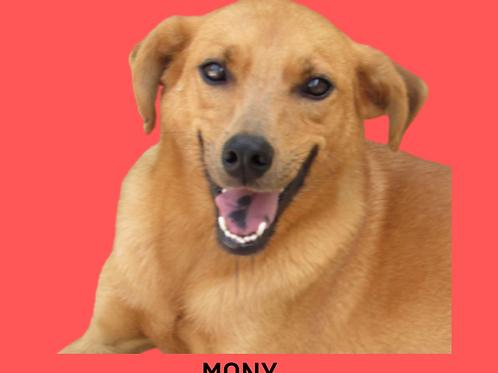 Mony-300 Anjos
