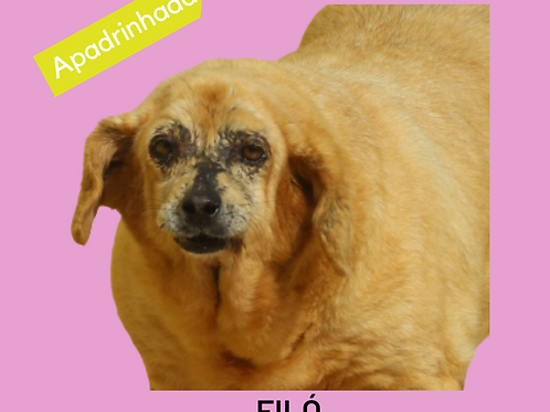 Filó-embu