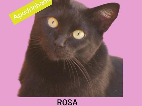 Rosa-gata