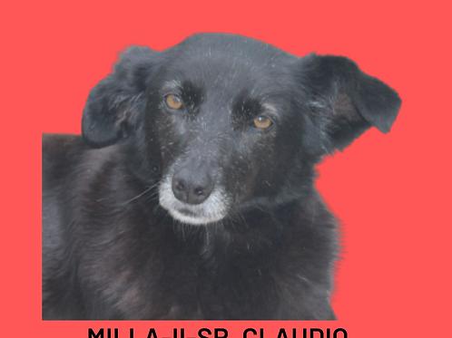 Milla-II-Sr. Claudio