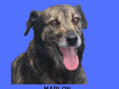 Marlon-300 Anjos