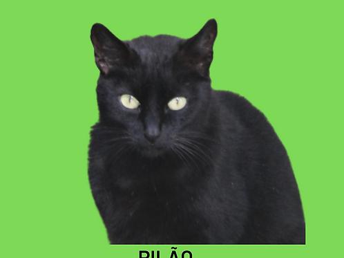 Pilão-gato