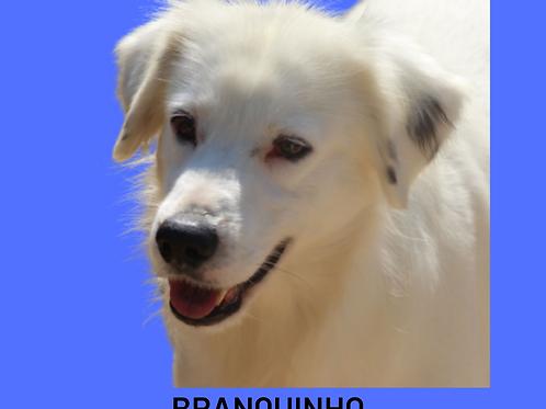 Branquinho-marcelo