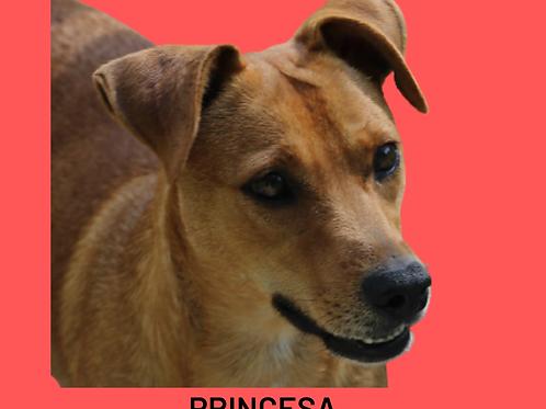 Princesa-caucaia