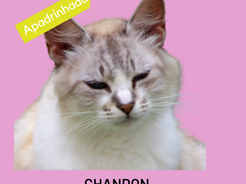 Chandon-gata