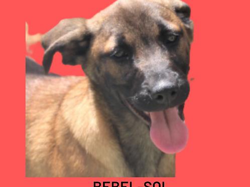 Bebel-sol