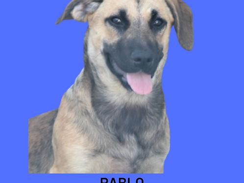 Pablo-princesa