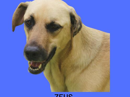 Zeus-madona