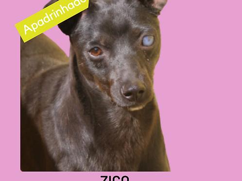 Zico-embu
