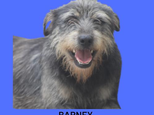 Barney-Sandra