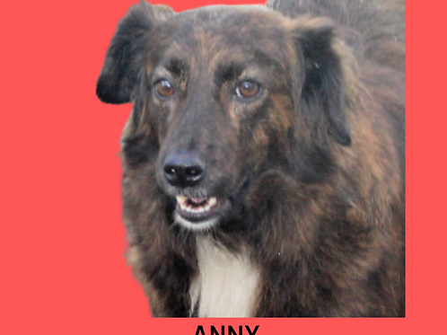Anny-embu