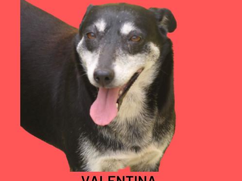 Valentina-Caucaia