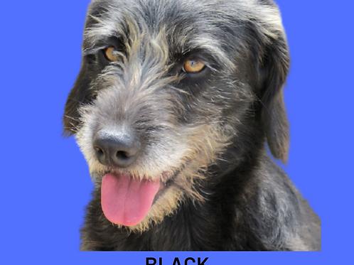 Black-sofia