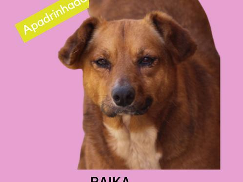 Raika-300 Anjos