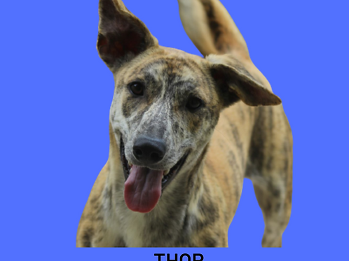 Thor-menina