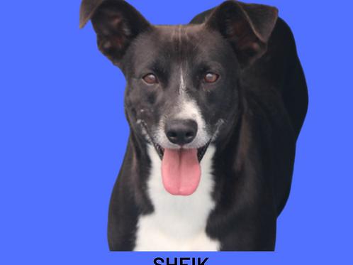Sheik-Dna Beth
