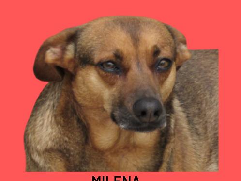 Milena-300 Anjos