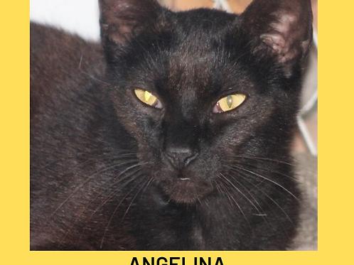 Angelina-gata