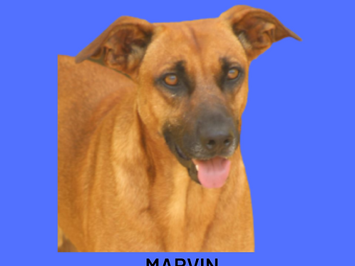 Marvin-Sr. Claudio