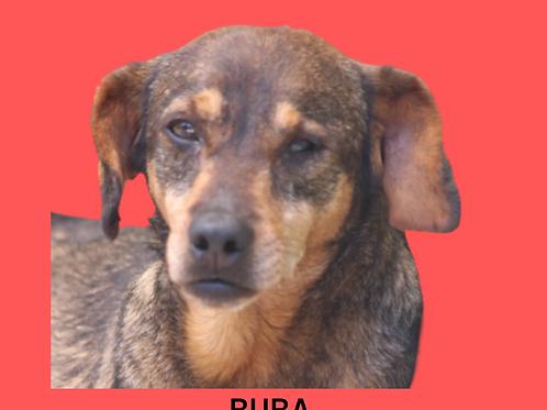 Buba-Sr. Claudio