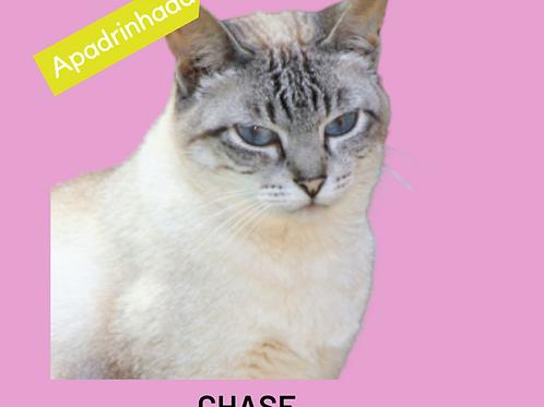 Chase-gata