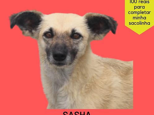 Sasha-caucaia