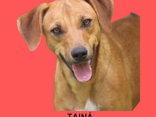 Tainá-amarula