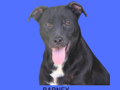 Barney-300 Anjos
